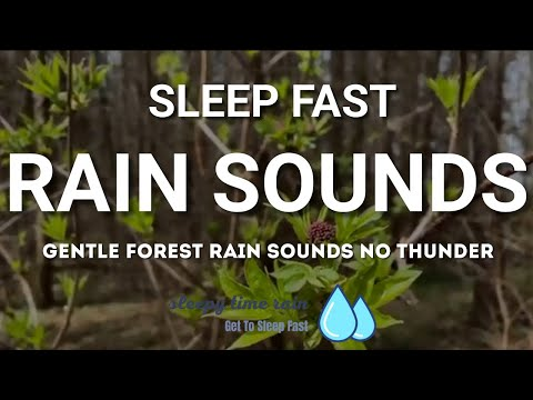 Forest Rain Sounds, Gentle Rain Sounds to Relieve Stress, Anxiety, Perfect Ambience for Sleep