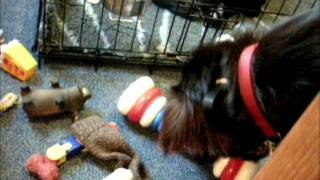 Sweeps Toy Selection.wmv Thumbnail