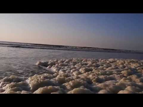 Sea Foam at Hoek van Holland Beach