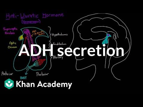 ADH secretion | Renal system physiology | NCLEX-RN | Khan Academy