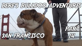 Bere's Bulldog Adventures Part 14: Journey To The Golden Gate