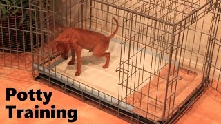 eHow  - Pet Care : How to Potty Train Your Puppy - eHow
