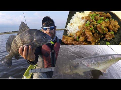 CATCH & COOK: General Tso's Drum + Bonus ZOMBIE Bluefish