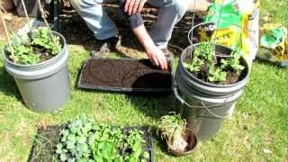 TRG 2012: How to Plant Beets and Spinach in Cell Flats for Transplants