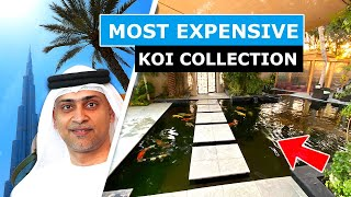 DUBAI MOST EXPENSIVE KOI COLLECTION *20,000 Gallon Koi Pond