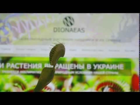 ЭСБЕ/Росянковые — Викитека