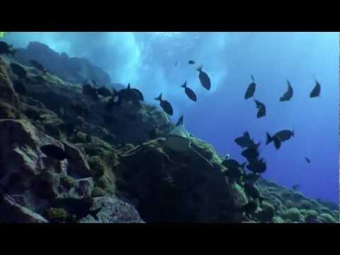 Expedición Salas y Gómez, Oceana y National Geographic