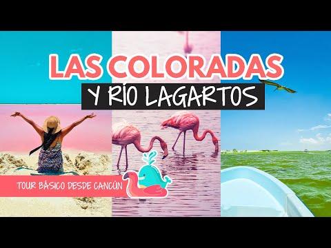 Las Coloradas y Río Lagartos: mi tour favorito desde Cancún