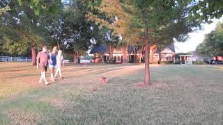 Tashi Yorkshire Terrier Oklahoma