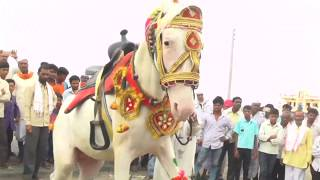 Horse Dancing video funny animals video