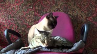 Кошка лечит сына