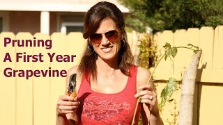Pruning A First Year Grape Vine And Propagating Cuttings
