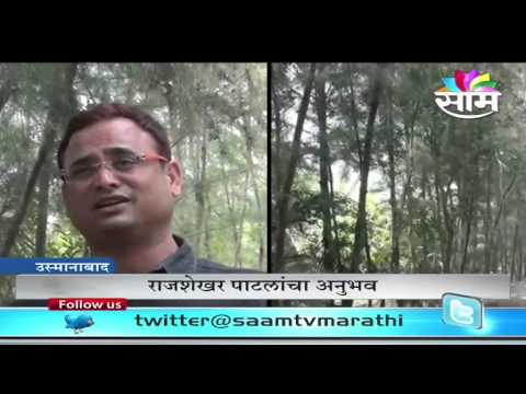 How bamboo and suru trees helped Rajshekhar Patil from hailstorms and rains