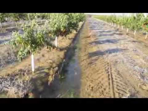Citrus Grove Frost Protection