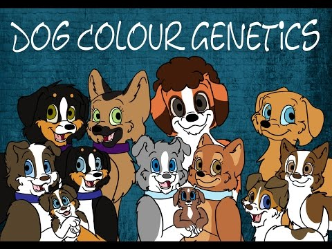 Dog Colour Genetics: Part 1 - Introduction