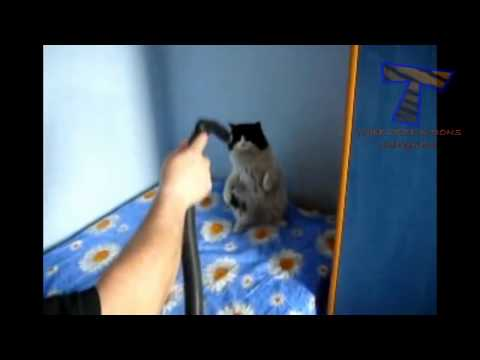 Best funny and cute cat videos compilation 2014  приколы скотами