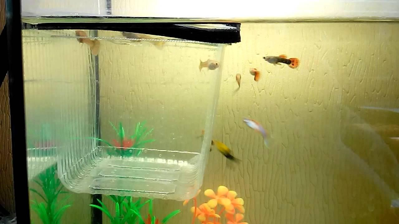 Рыбки данио едят корм Vitawater - YouTube
