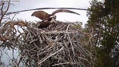 Mantan ja Manun vappuaatto 2020 / Ilomantsi Ospreys on May Day eve