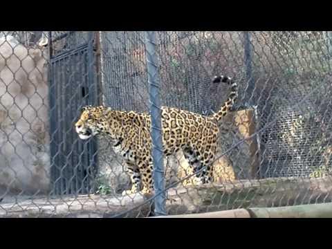 Paseo zoologico, santiago chile, 20-05-2017.