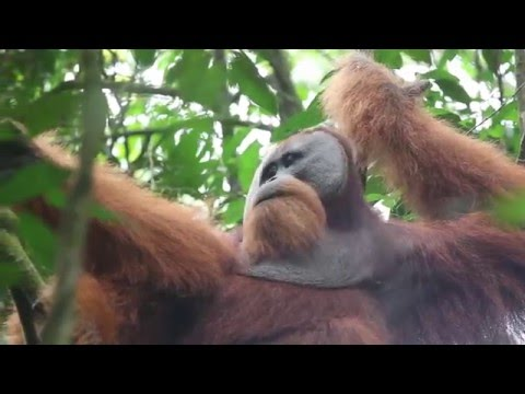 See what you're helping to save: The Leuser Ecosystem