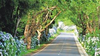Passeio pelo interior da ilha Terceira Açores | Tour on Terceira Island Azores by Mel Bettencourt TV