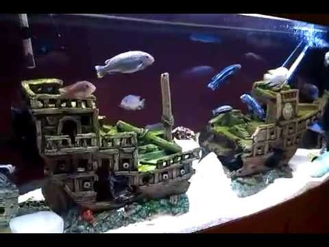 Aquarium cichlids and catfish in galleon shipwreck youtube for Fish tank pirate ship