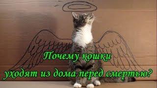 ПОЧЕМУ КОШКИ УХОДЯТ ИЗ ДОМА ПЕРЕД СМЕРТЬЮ  WHY CATS LEAVE HOME BEFORE THE DEATH