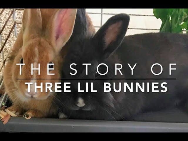 3 Lil Bunnies