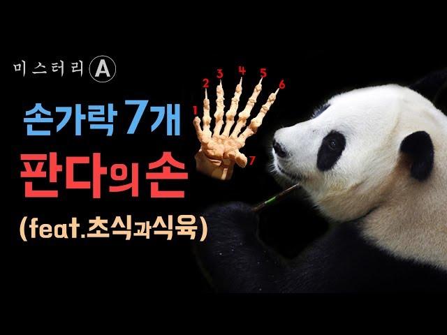 판다, 손가락 7개의 비밀 / 초식동물이 된 육식동물, 팬더