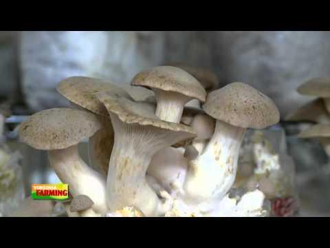 Virginia Farming: Farming Mushrooms