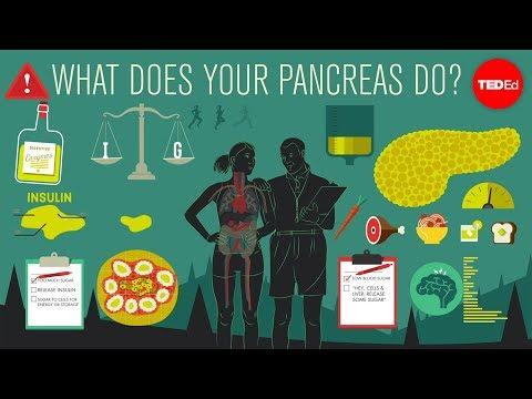 Was macht die Bauchspeicheldrüse? – Emma Bryce