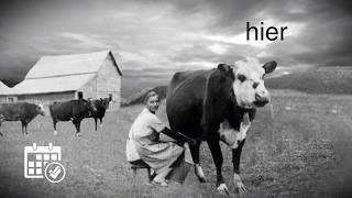 L'agriculture d'hier à aujourd'hui: La traite des vaches