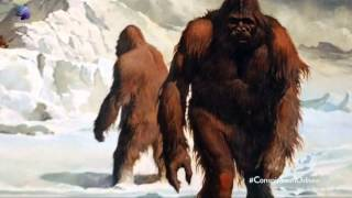 Teorías de la conspiracion: Cap8: Bigfoot. documentales de conspiraciones completos HD