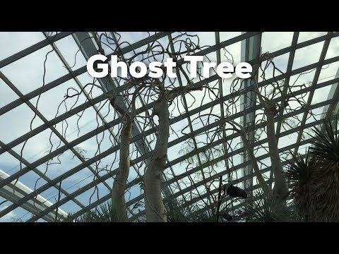 Ghost Tree at Garden by the Bay in Singapore