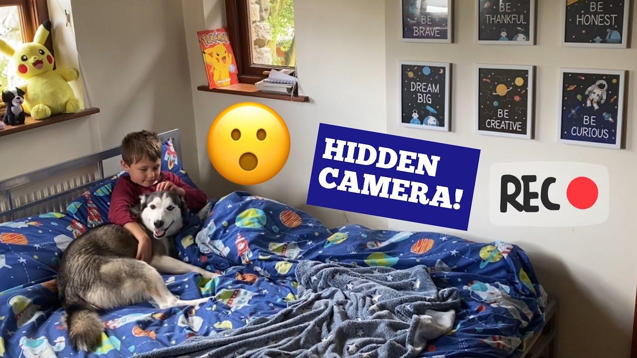 Husky Breaks Into Kids Bedroom & Then Refuses To Leave In The Funniest Way!! [HIDDEN CAMERA!]