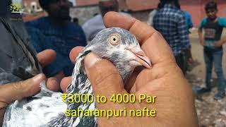 Anish bhai(molla gi ) ke saharanpuri sale in jama masjid delhi