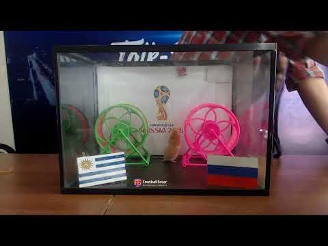 Prediksi Uruguay Vs Rusia Di Piala Dunia 2018 Bersama PO Si Hamster