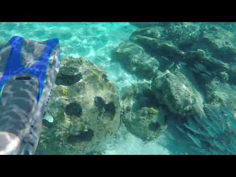 """Castaway Cay Snorkeling From the """"Disney Dream"""" 2018"""