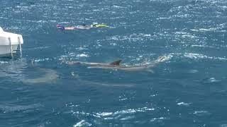 Плавание с акулами няньками. Мальдивы декабрь 2020