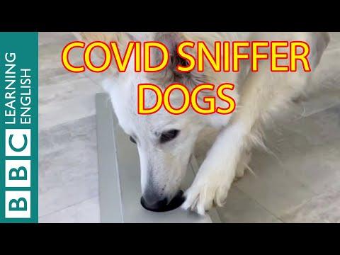The sniffer dogs detecting coronavirus