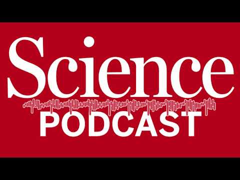Podcast: happy lab animals, and the indoor chemical cocktail