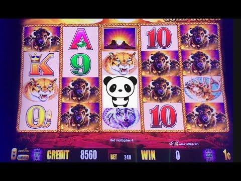 It's a super fun run on Buffalo Gold at San Manuel casino.