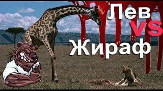 Опасные животные. Дикие животные. Жираф против льва