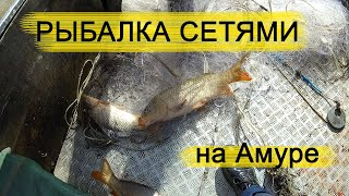 Рыбалка сетями на Амуре Лов Сазана Сома