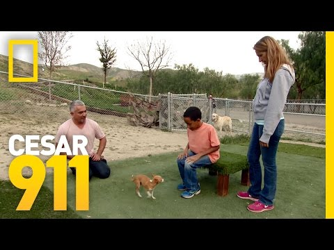 Facing Fears | Cesar 911