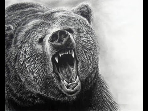 How To Draw Grizzly Bear Face Drawing Step By Step