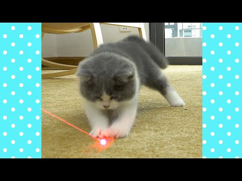 Cats vs Lasers Compilation | The Best Cute and Funny Baby Cat Videos