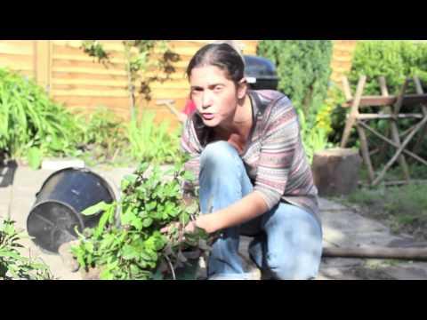 Juliette's Kitchen - Planting a Medicinal Herb Garden