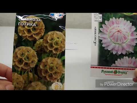 Заказ семян в интернет-магазине Semenapost.ru Внимание, выгодное предложение!