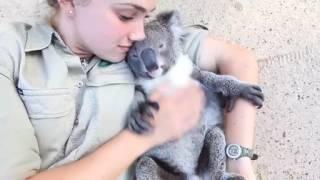 Обнимашки с коалой смотреть онлайн видео от Domingo в хорошем качестве